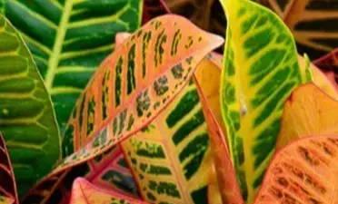 Top 10 Zimmerpflanzen