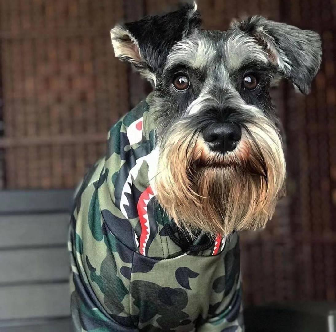 Dog hoodie for schnauzer