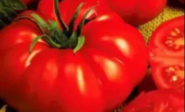 Top 10 Gemüsesamen