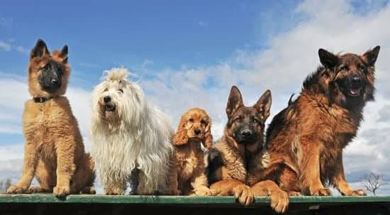 a group of dogs standing on a green table. All 5 dogs are different breeds and colors