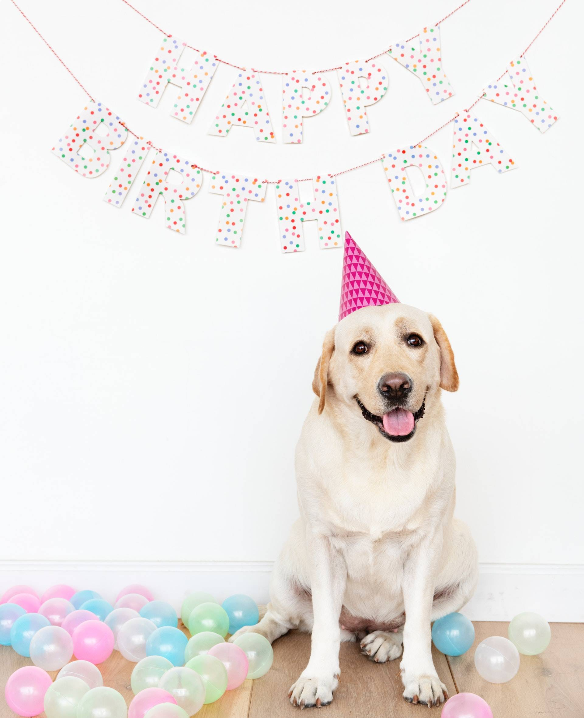 Guide to Throw a Fun Birthday Party for Your Dog