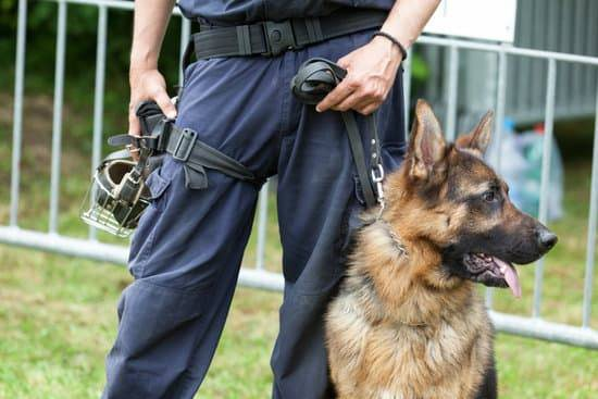 A k9 german shepherd standing with a police officer