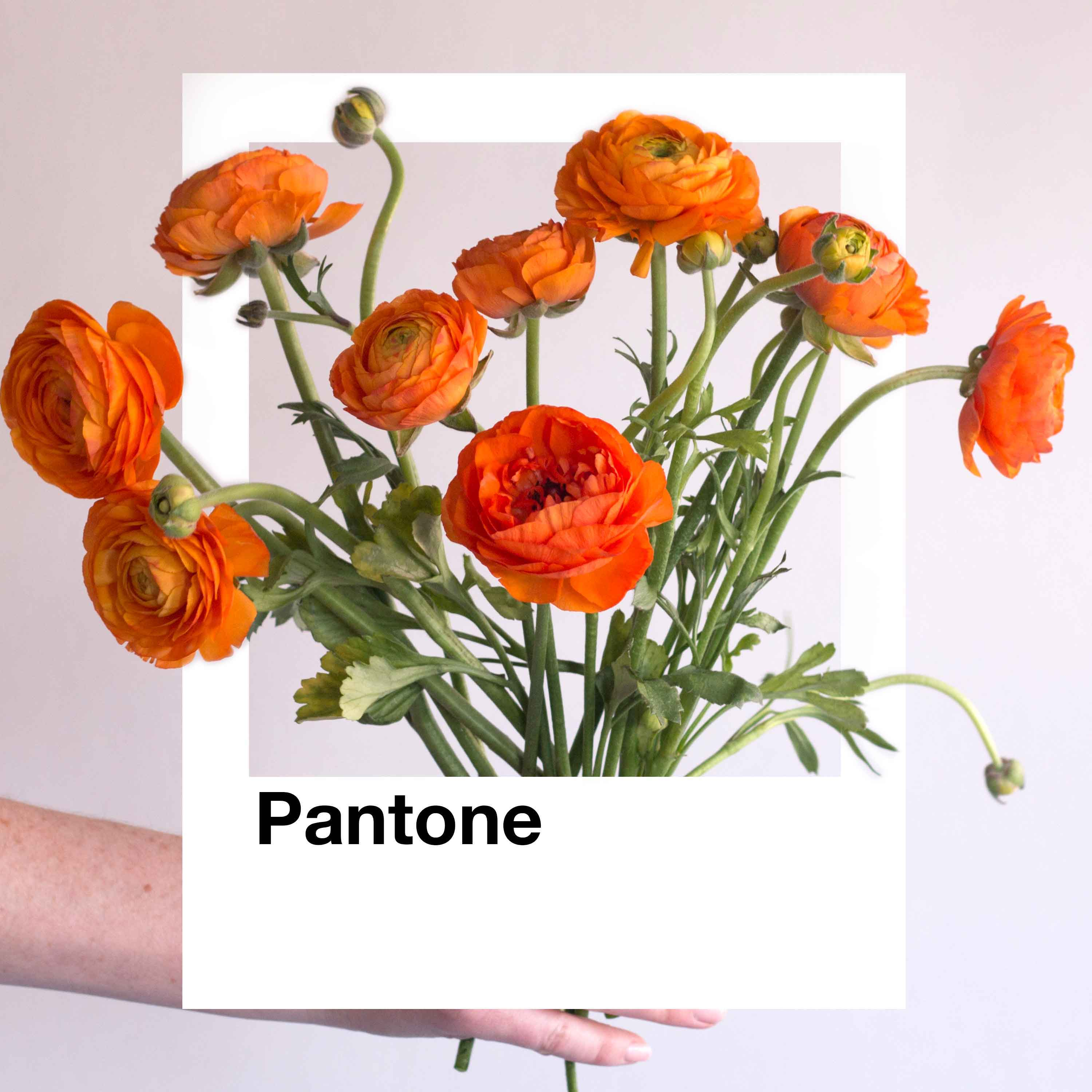 Orange Flower with Pantone