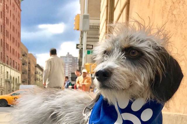 Dog Diarrhea: Help for a Little Dog in the Big City