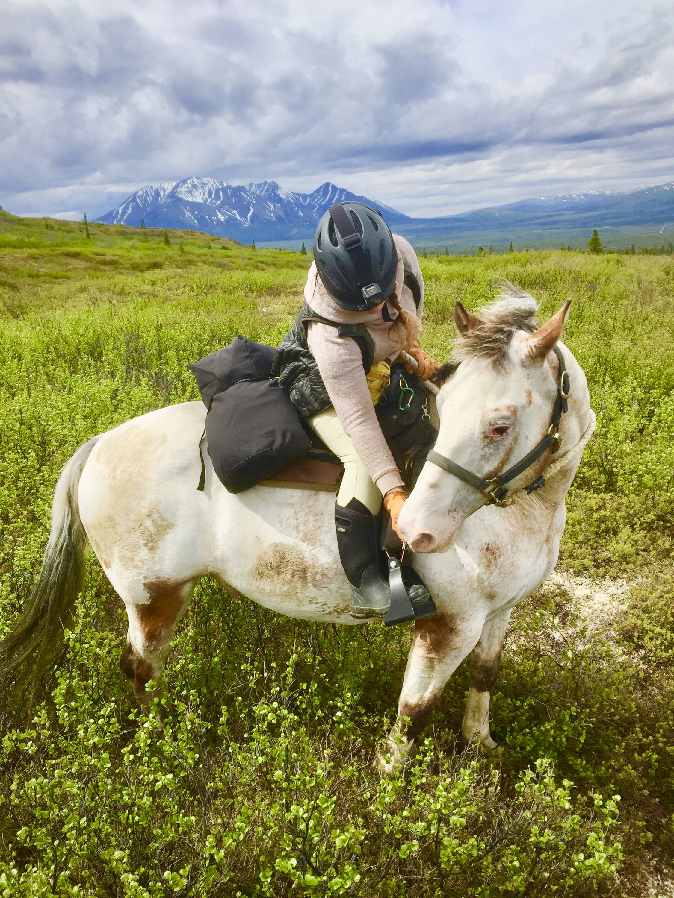Arctic Horse horse trekking trail riding denali alaska windy creek camping with horses Jen Dushane