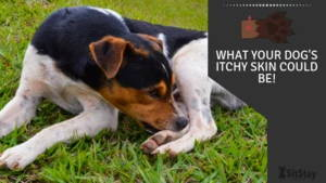 What your dogs itchy skin could be!