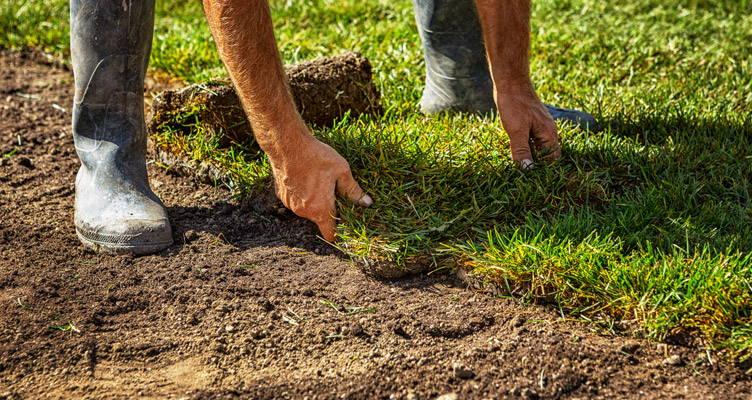 Grasmat, gazon en bodembedekker als gazon