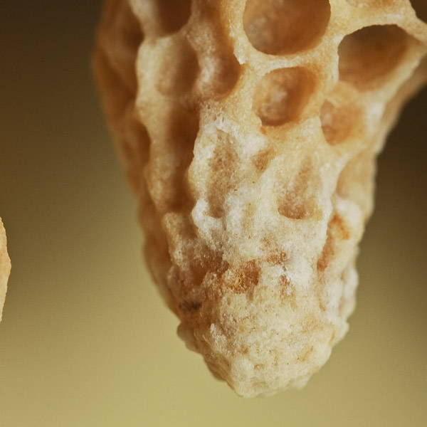 PureBee | Queen Bee cell filled with Royal Jelly