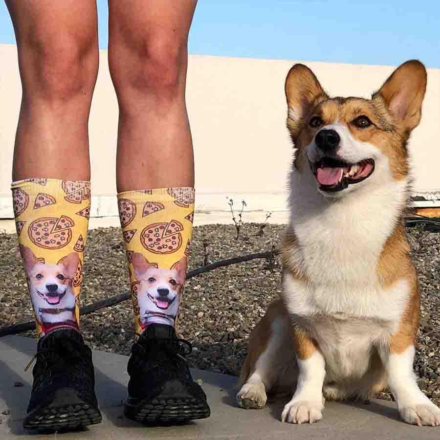Pembroke_Welsh_ Corgi_socks