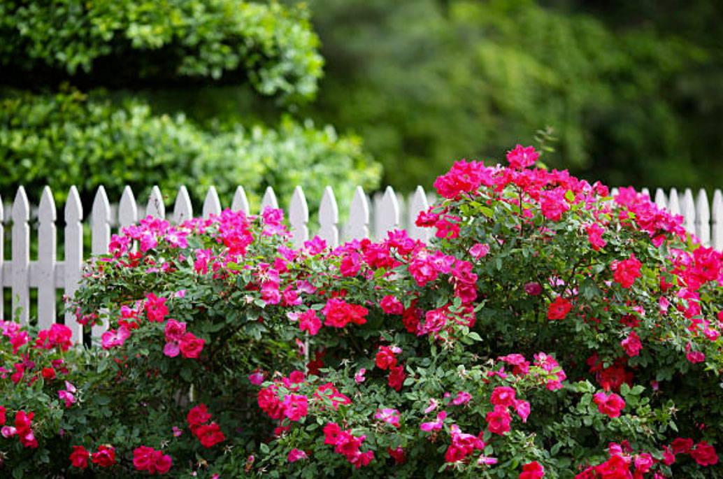 Flowering Shrubs How To Prune Plantingtree Com