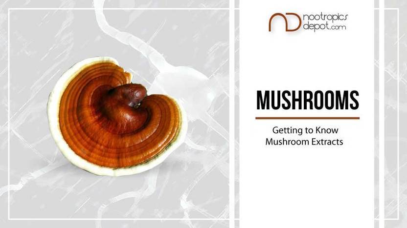 The Ultimate Guide to Mushroom Extracts