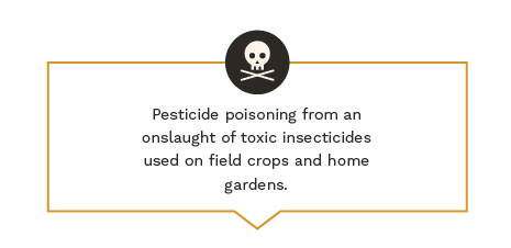 Pesticide poisoning from an onslaught of toxic insecticides used on field crops and home gardens.