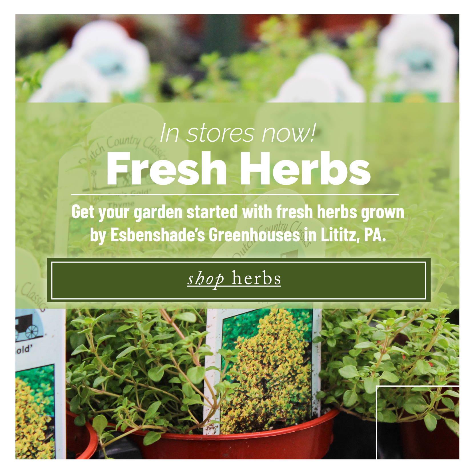 Shop Herbs
