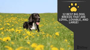 12 Best Big Dog Breeds That Are Loyal, Lovable, And Large