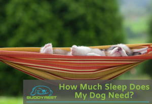 How Much Sleep do Dogs Need