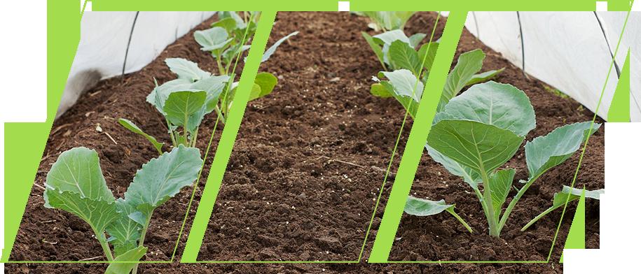 vegetable garden using ecogardener clear poly film