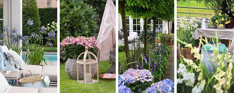 Thrilling summer flowering bulbs