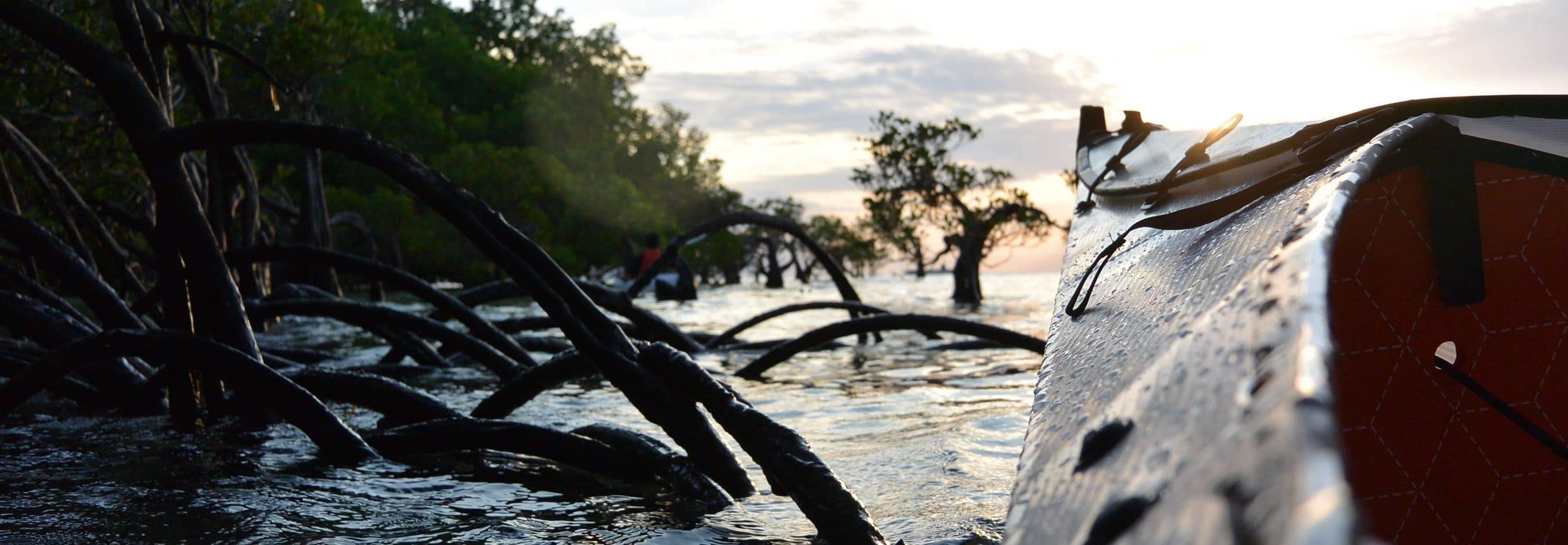 Oru Kayak paddling around mangroves