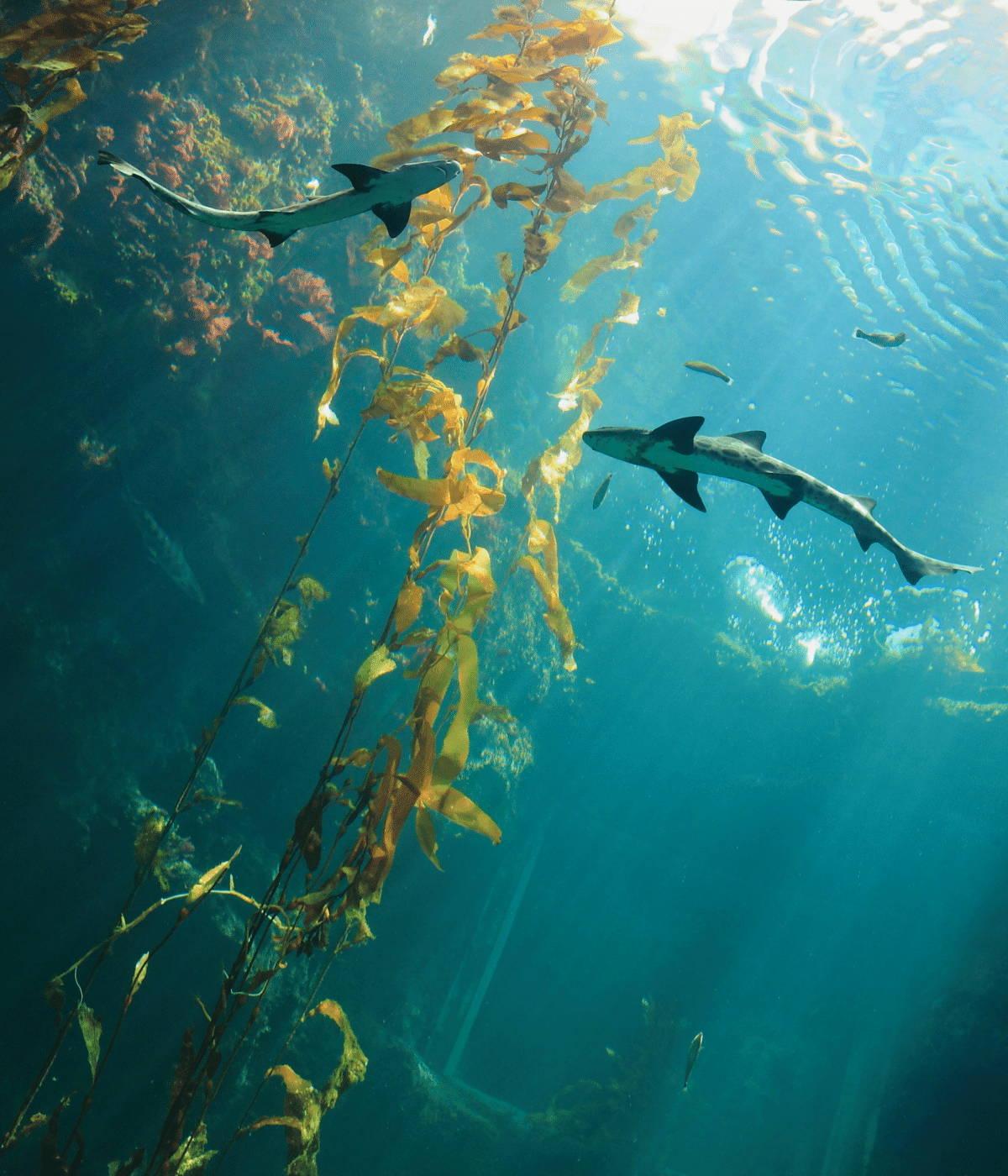 Algae growing in the ocean