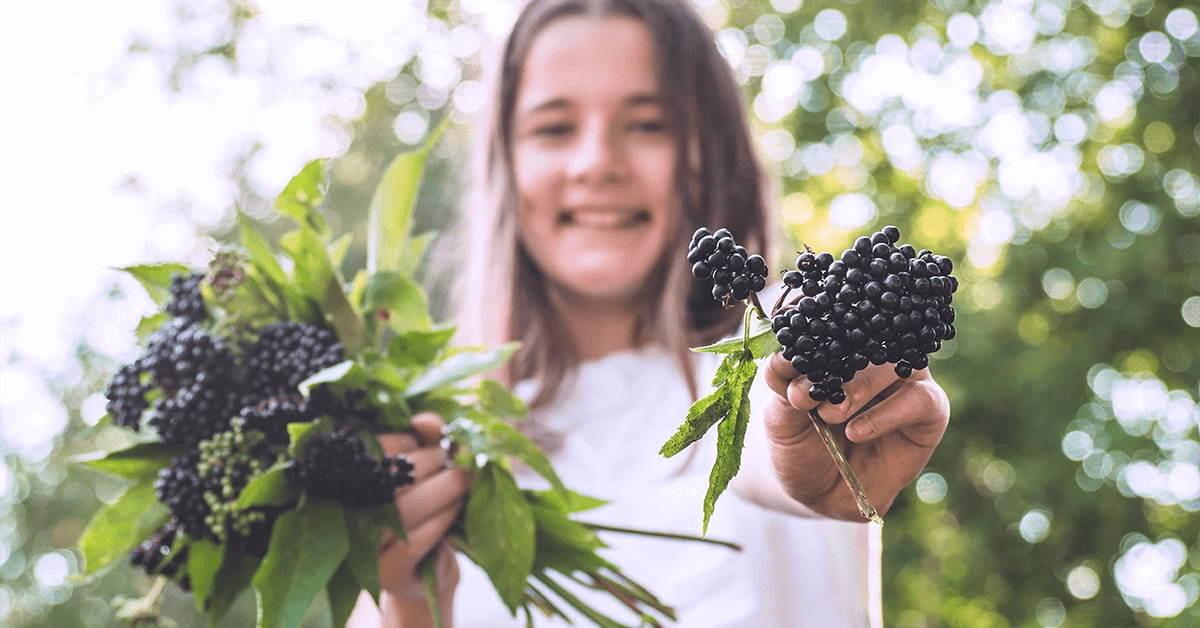 Young girl holds bunches of black elderberries
