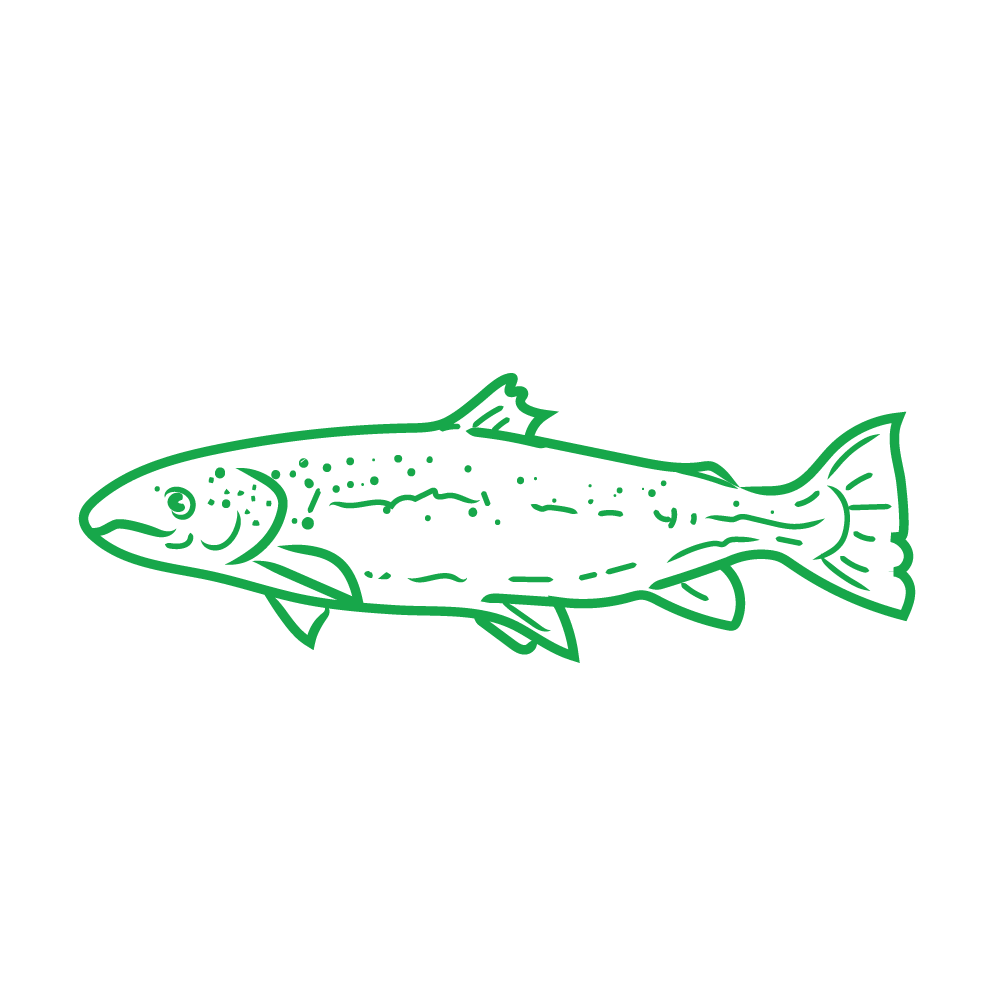 Wild caught pacific salmon