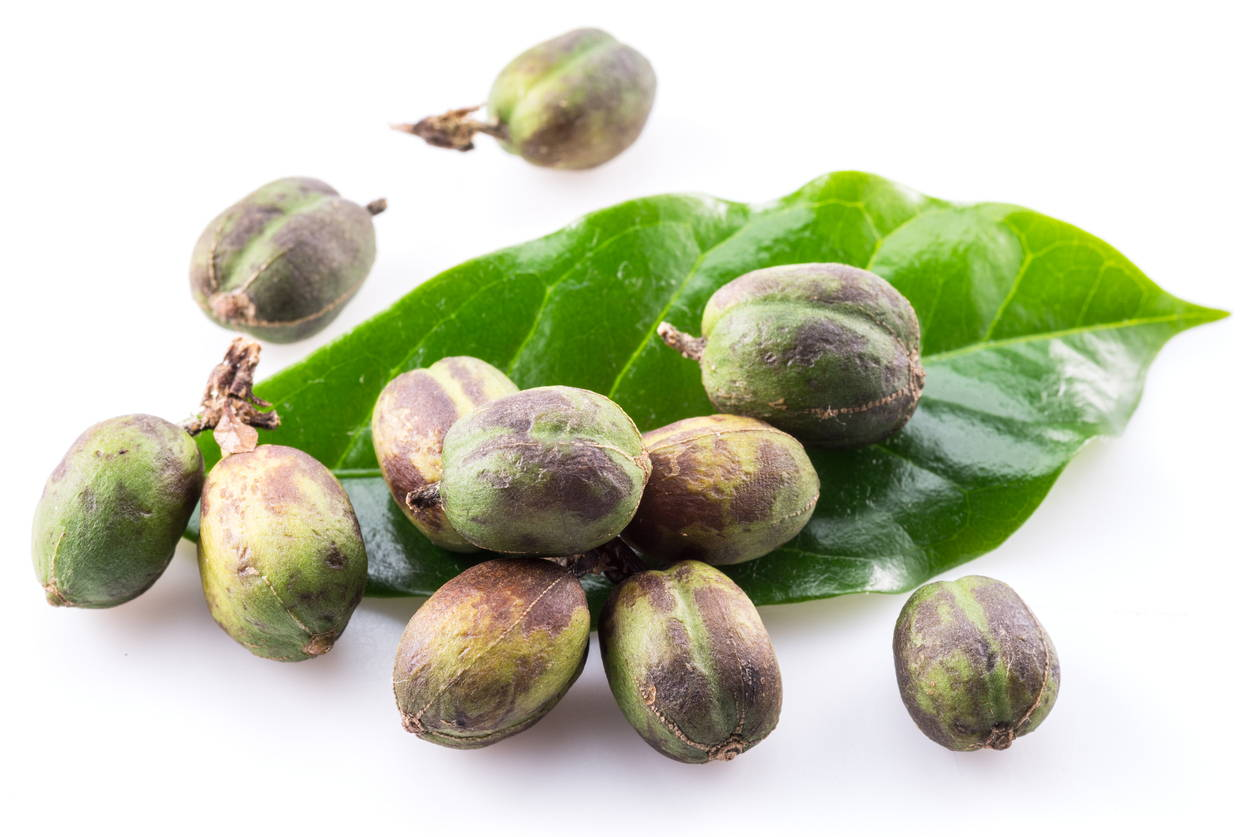 green coffee bean extract for fat loss