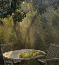 A table in an apple orchard