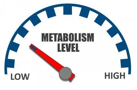 Illustration of metabolism level meter on low.
