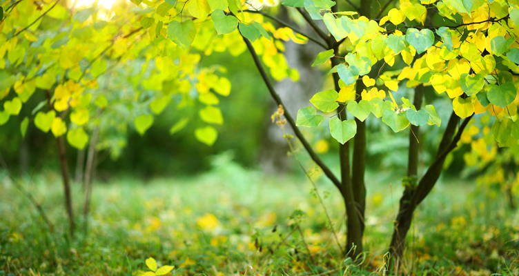 Les arbres d'un petit jardin
