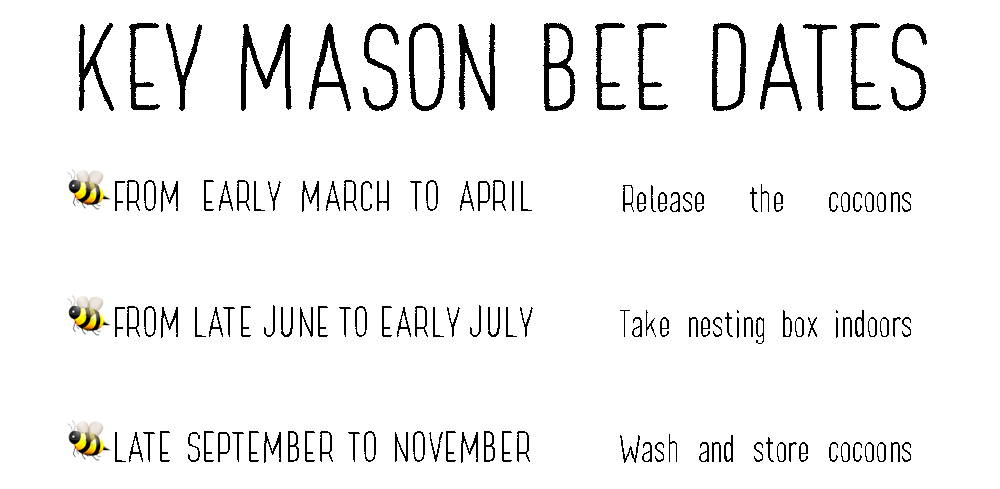 Key Mason Bee Dates: From early March to April, Release the cocoons. From late June to early July, Take nesting box indoors. Late September to November, Wash and store cocoons.
