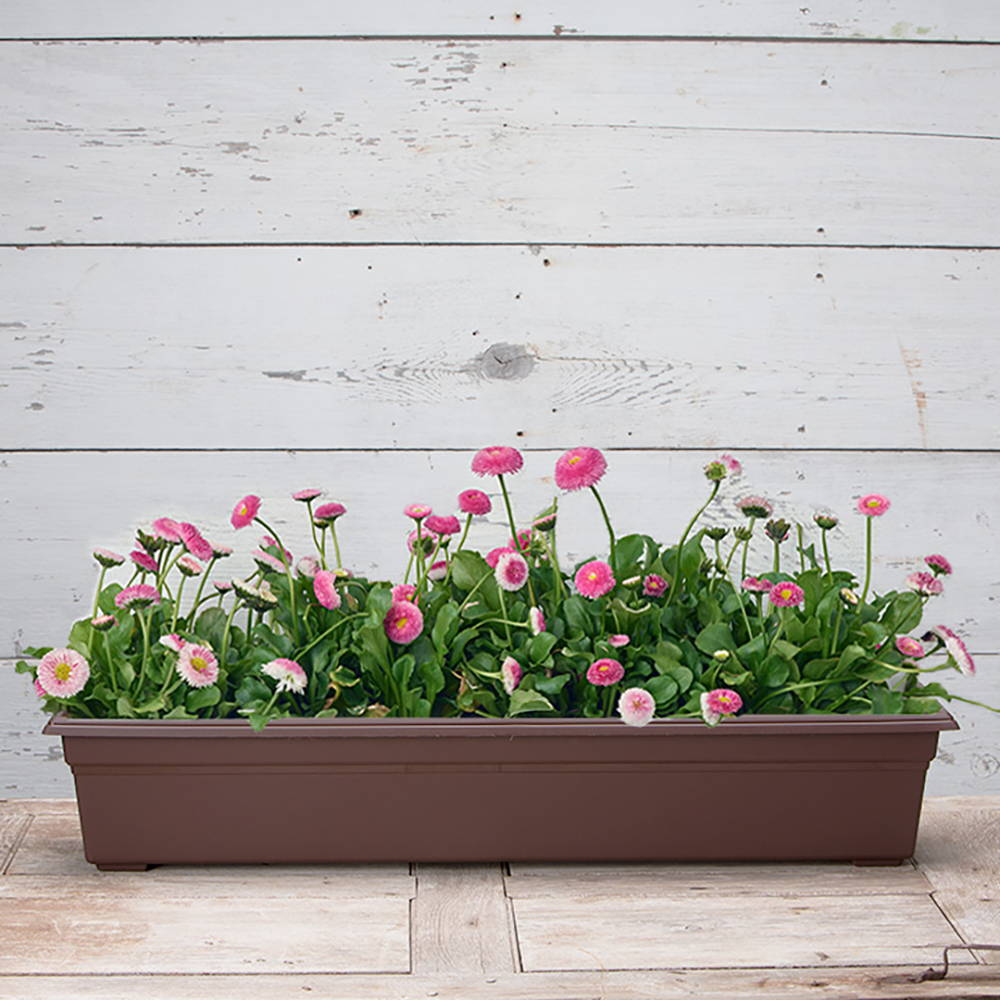 Pink flowers growing in a brown countryside flower box