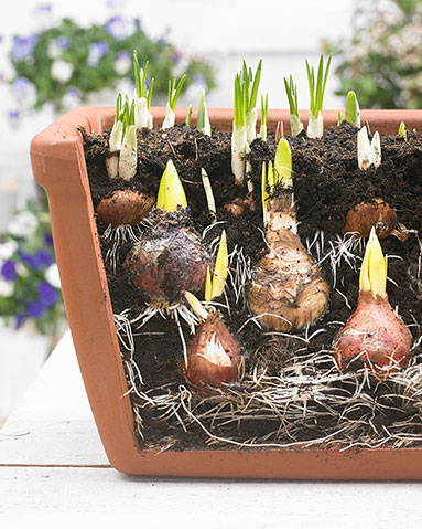 Lasagnebeplanting in pot