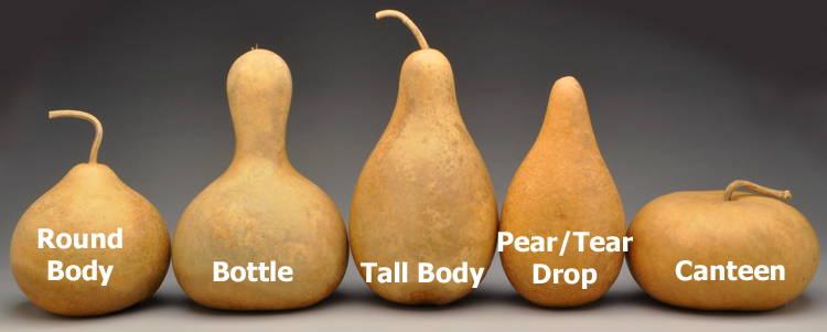all about gourds welburn gourd farm