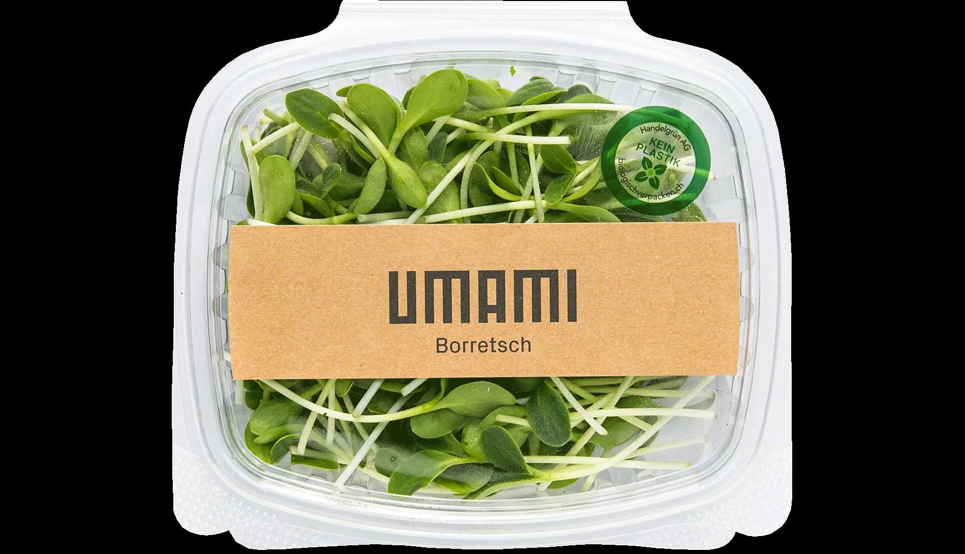 Borretsch MIcrogreens von der UMAMI Urban Farm