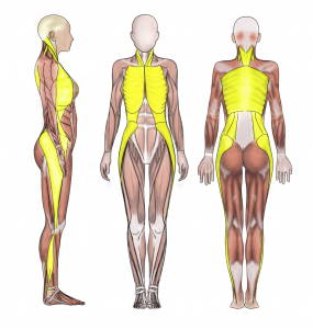 Lateral Fascia Lines shown in yellow