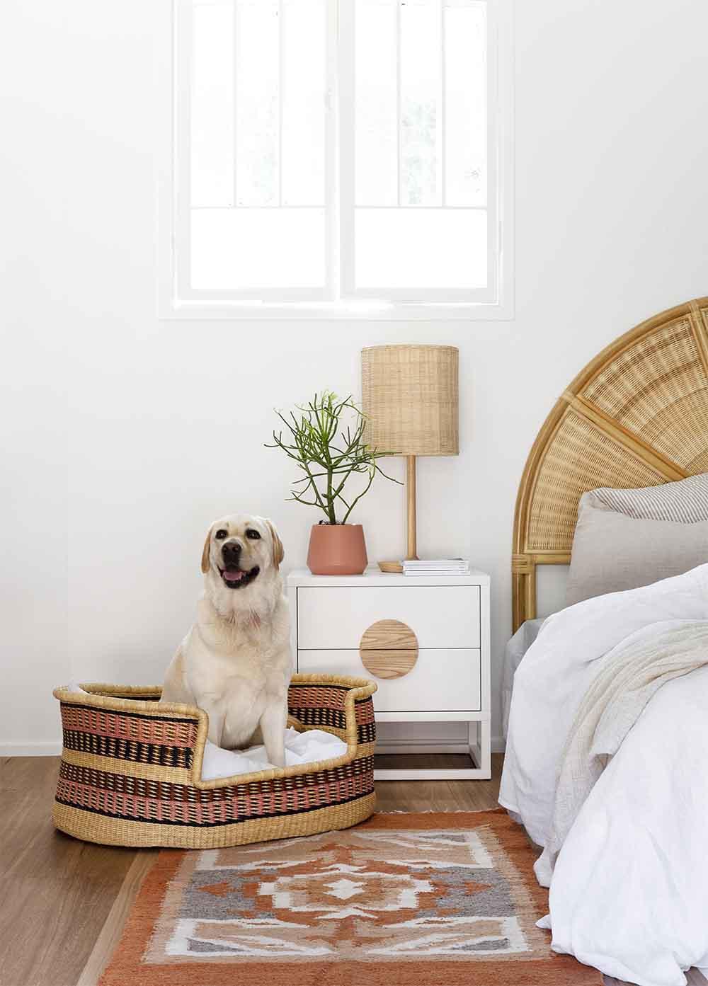 basket beds for dog