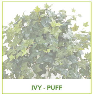 ARTIFICIAL PUFF IVY PLANTS