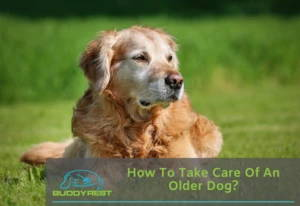 How To Take Care of an Older Dog