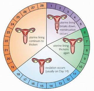Vaginal Discharge – WUKA