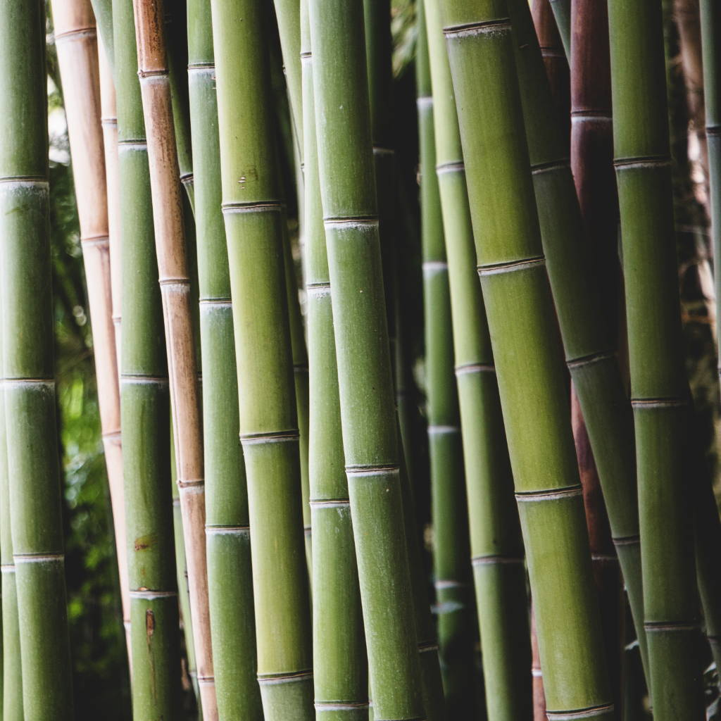 Bamboo trees for fabric