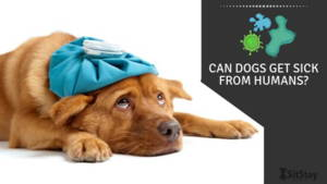 Can Dogs Get Sick from Humans?