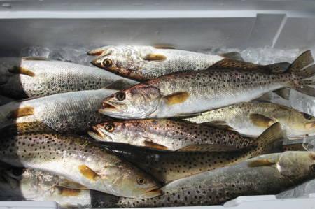 Sea Trout Recipes