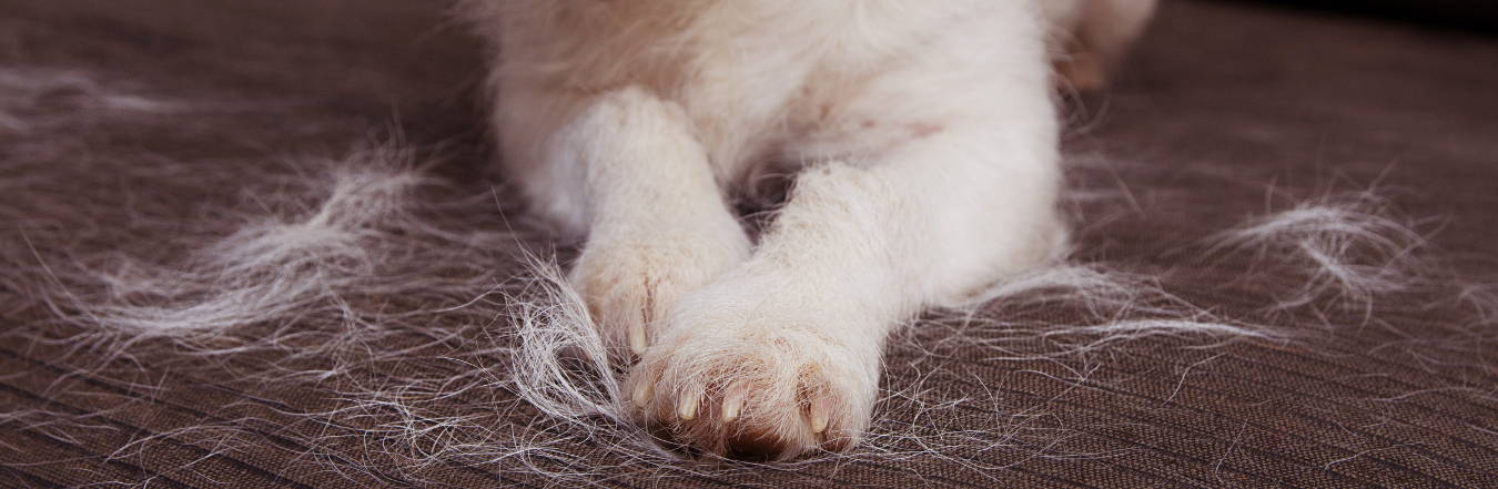 What is Demodex?