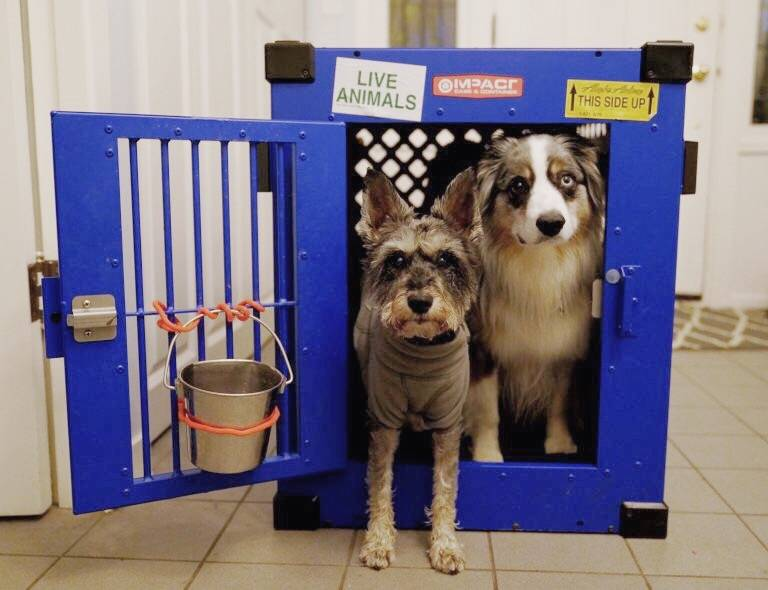 Here Is How I Prepared For A 10 Hour International Flight With 2 Dogs Impact Dog Crates