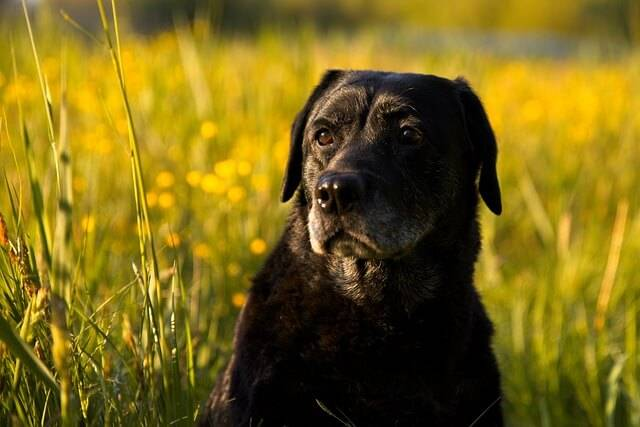 Your Dog and Inflammation