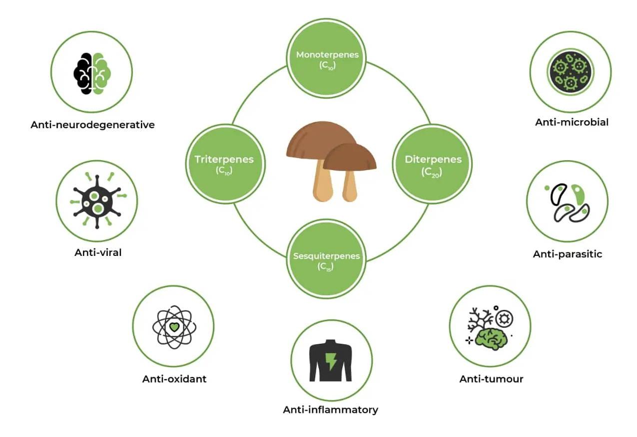 medicinal mushroom terpenoids