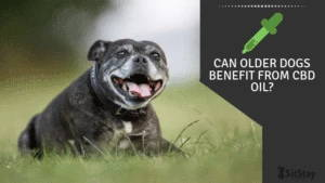 Can Older Dogs Benefit From CBD Oil