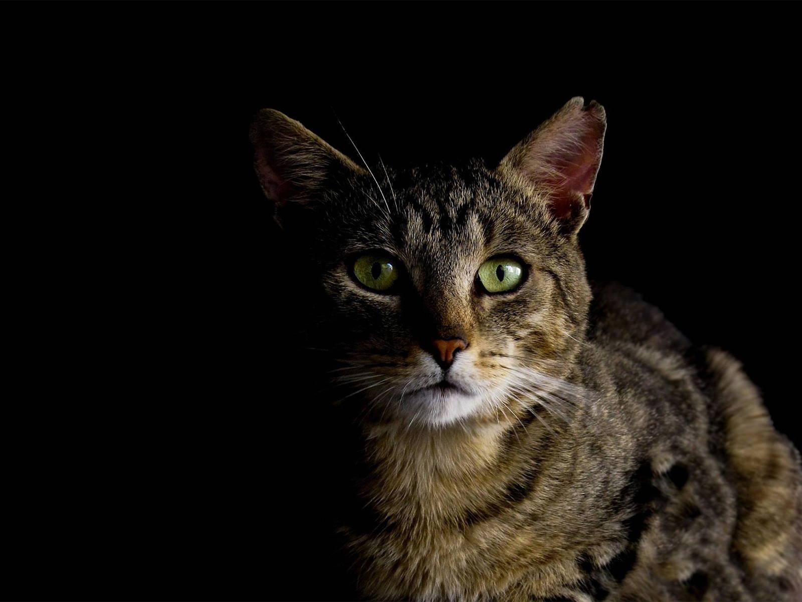 Katze miaut nachts Header