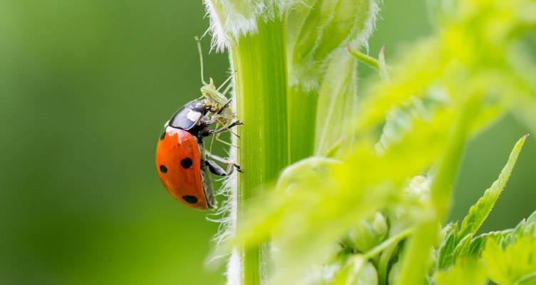 Biologisch bestrijden van ongedierte