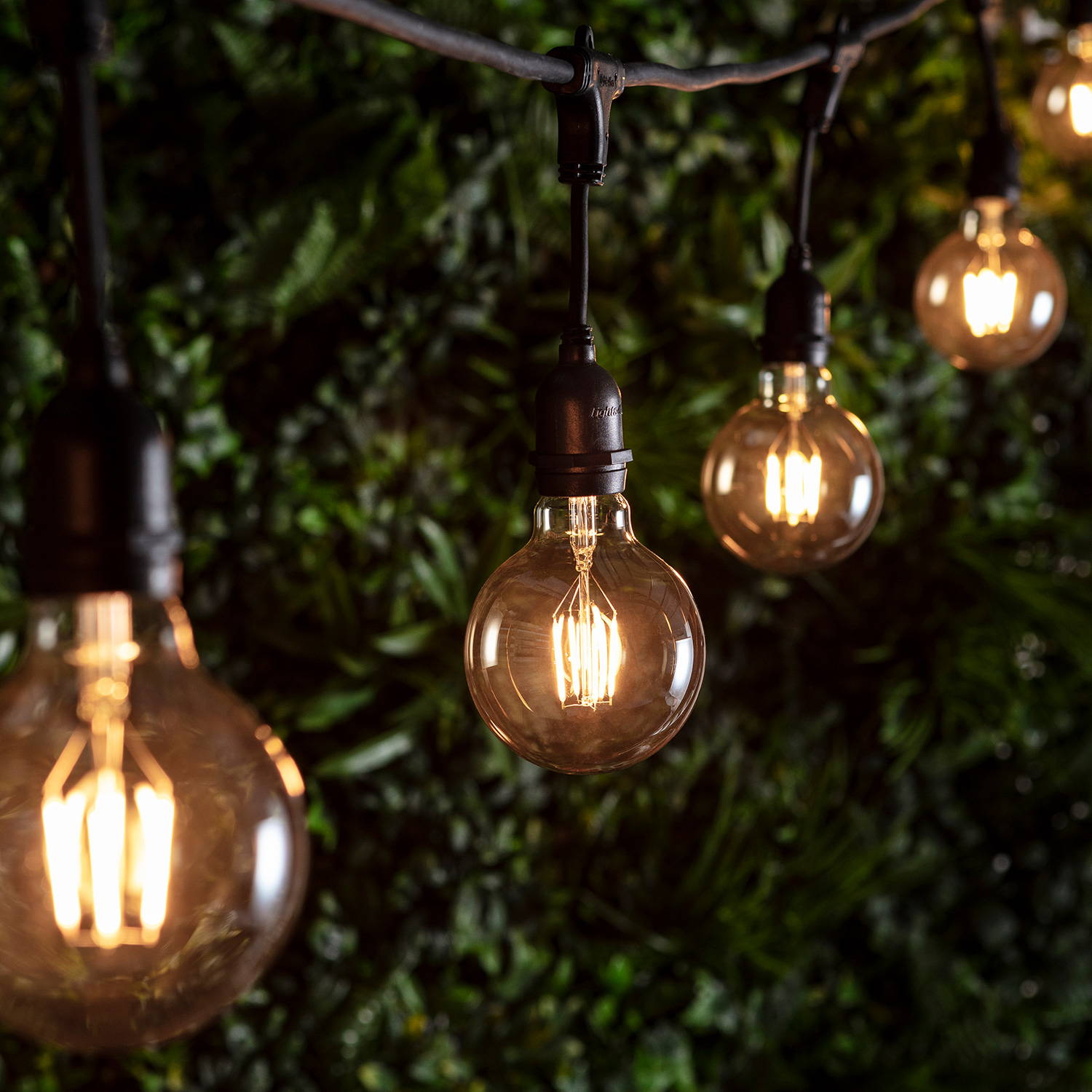 Large globe traditional style bulbs  on a festoon string in a green garden setting